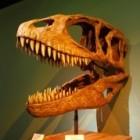 De moeilijke naam dinosaurus: Carcharodontosaurus