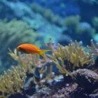 Samenstelling vissen voor aquarium