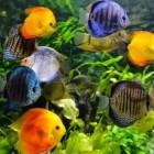 Voeding voor aquariumvissen