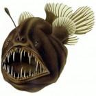 Diepzeehengelvis – monster met een lampje
