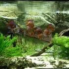 Opstarten van Zuid-Amerikaans biotoop aquarium