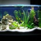 Opstarten van een Tanganyika biotoop aquarium