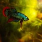 Visziekten: symptomen en behandeling zieke aquariumvissen