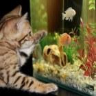 De waterlagen in het aquarium - welke vis zwemt waar?
