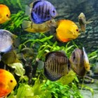De voeding van aquariumvissen is belangrijk!
