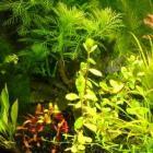 Algenvrij aquarium met de Redfield Ratio