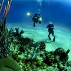 De schoonheid van het koraalrif