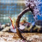 Meest voorkomende soorten aquarium garnalen