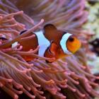 Visziekten in de vijver en het aquarium