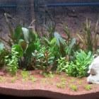 Hoe houd ik mijn aquarium schoon?
