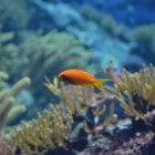 Je wilt een aquarium: en dan?