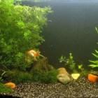 Verschillende soorten zoetwateraquaria