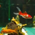 Aquarium maken/vullen