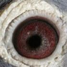 Vogels en ogen, perfecte aanpassingen om te overleven