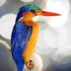 Vaak geziene vogels in zuidelijk Afrika