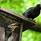 Vogels voeren (lente, zomer, herfst, winter)