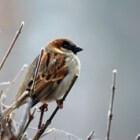 Vogeltelweekend, tel de vogels in je tuin