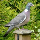 Wat voor soort voedsel eten de diverse vogels in mijn tuin?