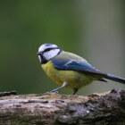 Wanneer moet je vogels voeren wat eten ze en waar leg je het