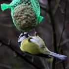 Praktische tips voor het voeren van tuinvogels