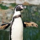 Vogels in de kou: pinguïns