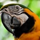 Welke papegaaien zijn er