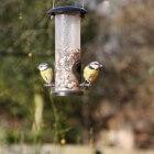 Vogels voeren zonder ongedierte te trekken