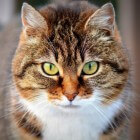 Abces bij een kat, hoe ontstaat het en wat zijn de gevolgen?