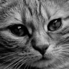Leverziekte bij de kat: herken de symptomen