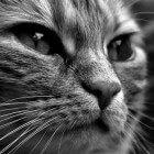 Kattenziekten: hartaandoening