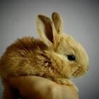 Ziekten en kwaaltjes bij konijnen