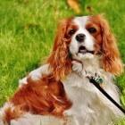 Verstopping (obstipatie) bij hond: wat te doen