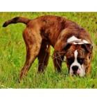 Diarree hond: wat te doen?