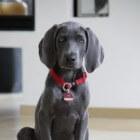 Aandoeningen hond: huidontsteking