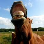 Kies stempelen bij een paard, ouderwets?