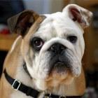 Huidaandoeningen hond