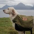 Aandoeningen hond: rughernia