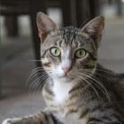 Aandoeningen kat: blaasontsteking
