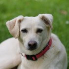 Hartproblemen hond: gaatje in hartwand (VSD)