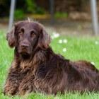 Gezondheidsproblemen bij de hond: Voortplantingsstelsel man