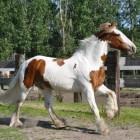 Veelvoorkomende huidzwellingen bij het paard