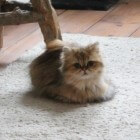 Als de kat braakt