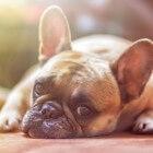Symptomen van kanker bij honden herkennen