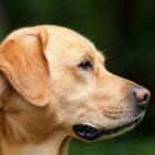 Huidproblemen hond: overmatige jeuk aan de huid, oorzaken