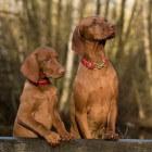 Symptomen hondenziektes: oorzaken acute diarree hond