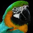Help mijn papegaai is ziek