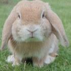 Snotneus bij konijnen, wat te doen?