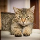 Bloed bij ontlasting kat en kitten: symptomen en oorzaken
