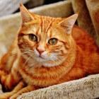 Kattenziekten op een rij