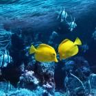 Porifera - de sponzen